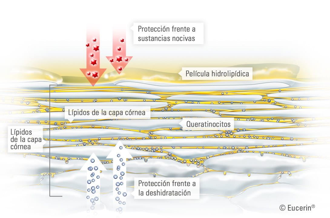 skin-structure-and-function